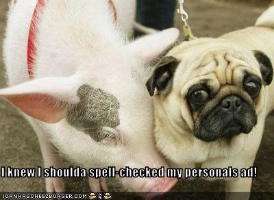 dating,personal ad,pig,pug