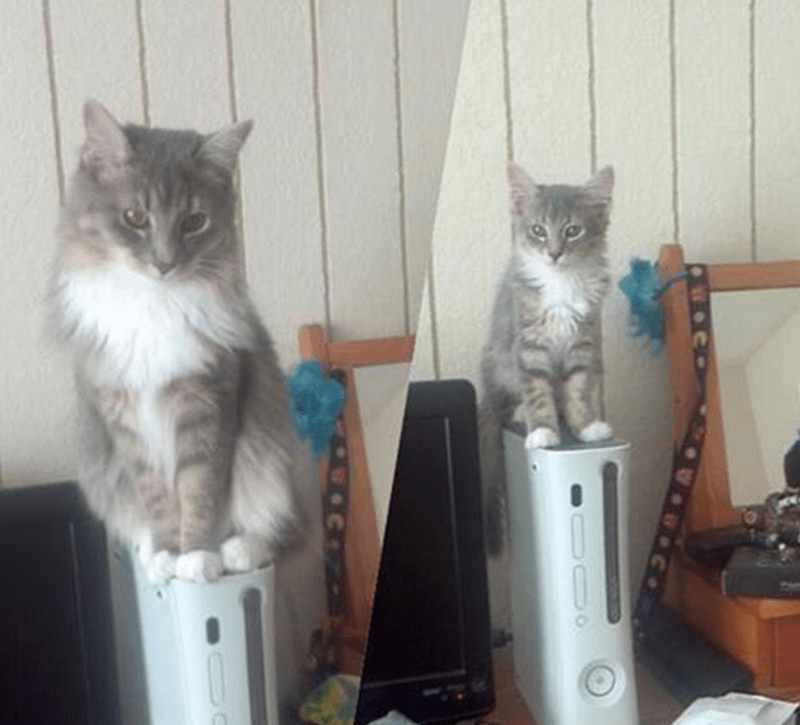 a funny photo of a cat sitting on a xbox and a pic next to it showing the same thing just the cat as a kitten