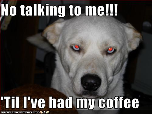 coffee,labrador,no,talking