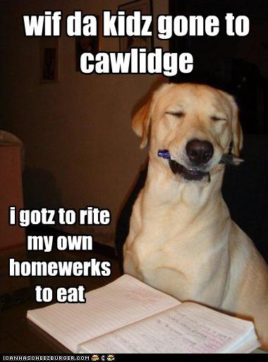 golden retriever,homework