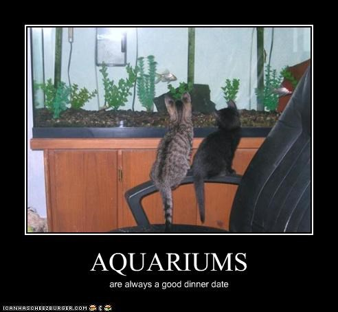 aquarium dating lolfish watching - 3162744576