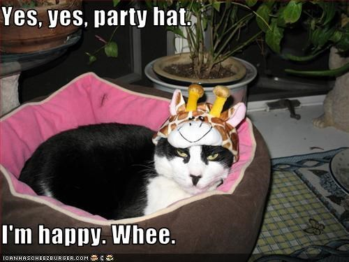 cat,party hat,whee