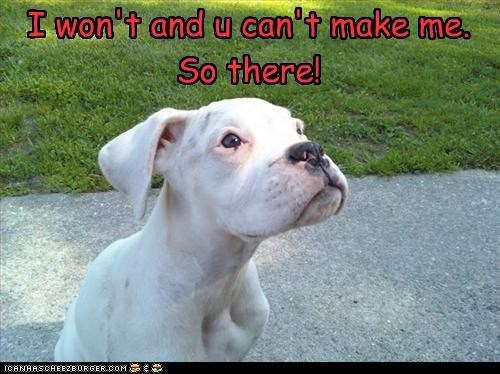 no pit bull puppy - 3163166720