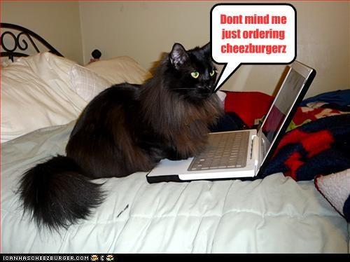 Dont mind me just ordering cheezburgerz