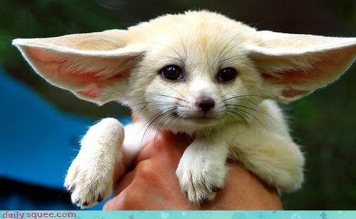 fennec fox over it so cute - 3163320064