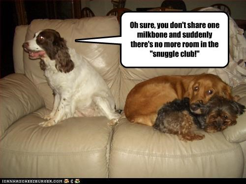 bone brittany spaniel club golden retriever milk share sharing snuggle - 3163775232