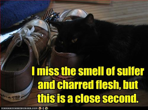 basement cat,evil,shoes,smelling