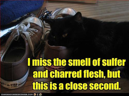 basement cat evil shoes smelling - 3164664064