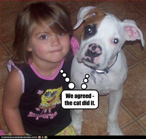 blame cat human pit bull - 3164743424