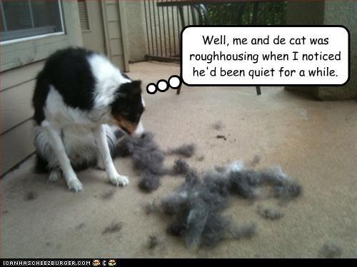 australian shepherd fur lolcats oops - 3164791296