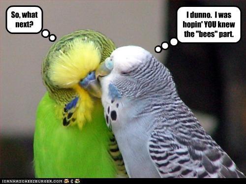 cute kissing lolbirds - 3164825344