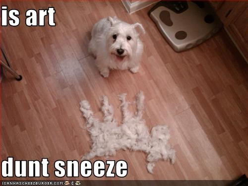 art fur hair shedding west highland white terrier