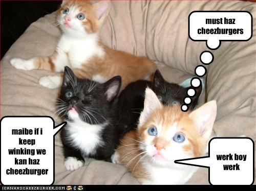 Cheezburger Image 3165225728