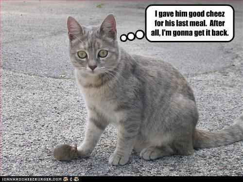 cat cheez mouse nom - 3165290496