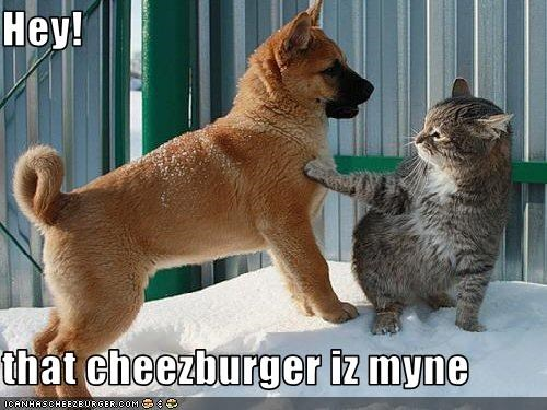 Cheezburger Image 3167070464