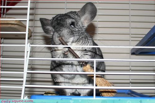 Chinch chinchilla cute props - 3167371776