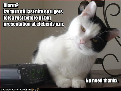 alarm bad cat helping - 3167516672