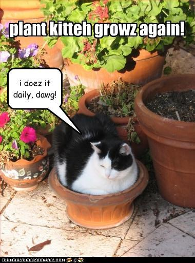 plant kitteh growz again! i doez it daily, dawg!