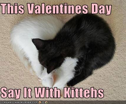 cute hearts kitten love valentines