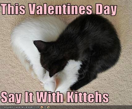cute hearts kitten love valentines - 3167845376