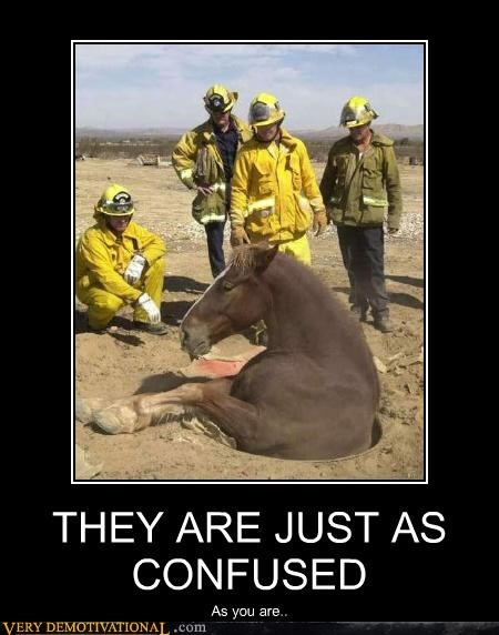 confusing,fire dpeartment,horse