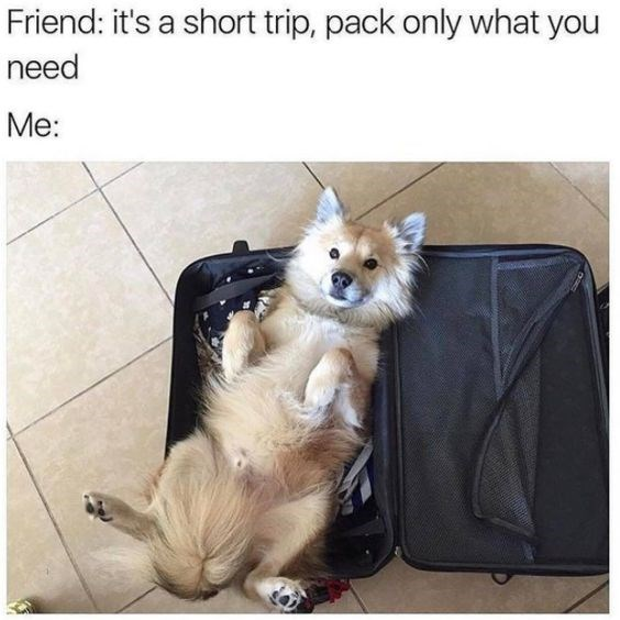 a funny meme photo of a person packing only the important things so they pack their dog - cover for a funny list of memes