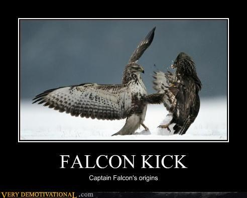 captain falcon falcon kick falcon punch Pure Awesome Terrifying - 3169152512