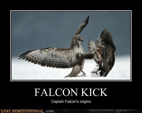 captain falcon falcon kick falcon punch Pure Awesome Terrifying - 3169152512