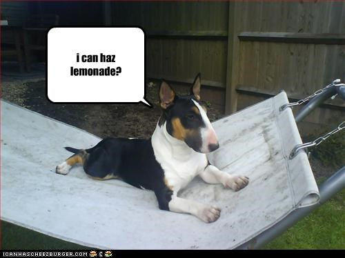 Cheezburger Image 3169287424