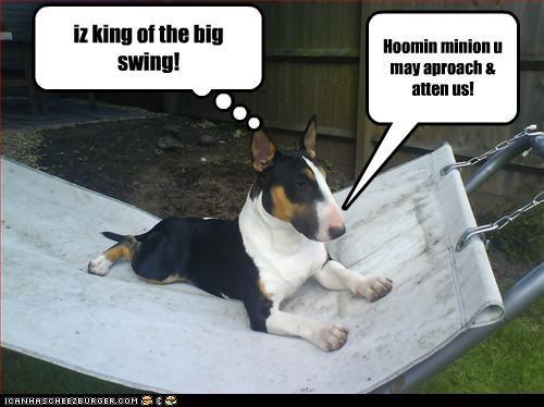 iz king of the big swing! Hoomin minion u may aproach & atten us!