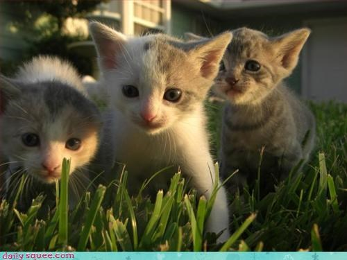 kitten,siblings,three