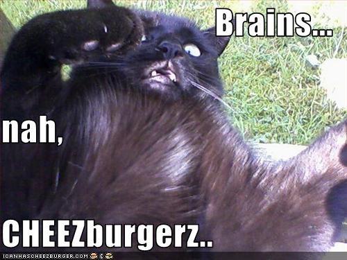 Cheezburger Image 3169607680