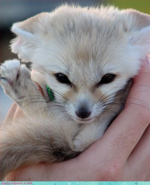 face fennec fox fox - 3170102528