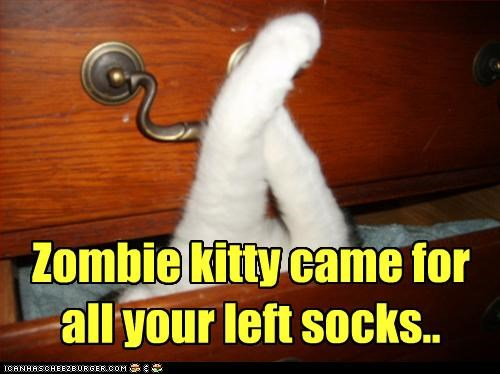 cat socks steal zombie - 3171811584