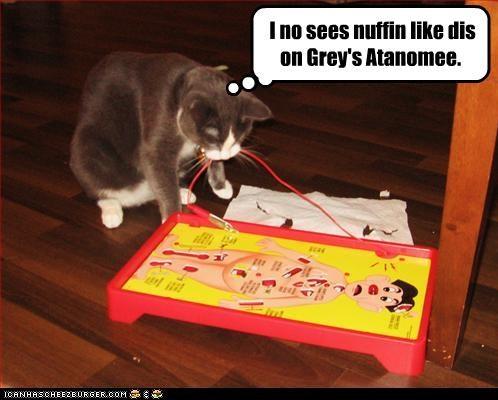 cat Greys Anatomy operation