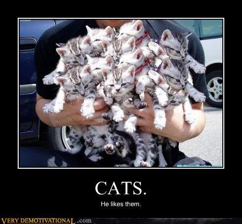 lots of them,Cats,bushel