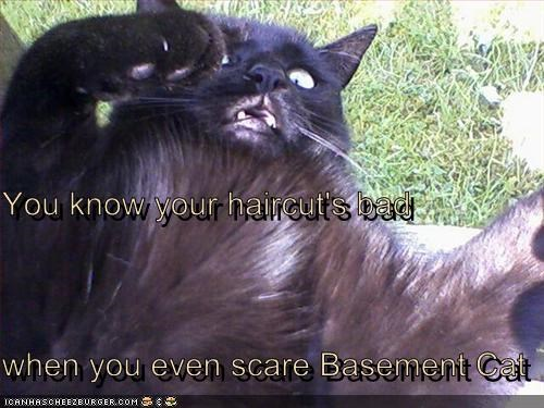 bad haircut,basement cat,cat,scare