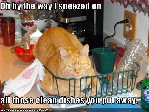 cat,dishes,oh hai,sneezed