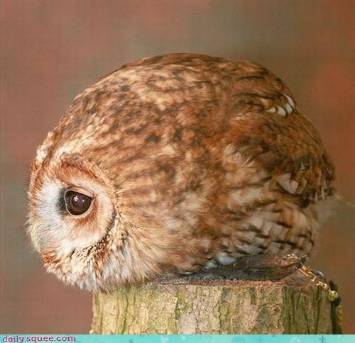 cute Owl spheres - 3173210368