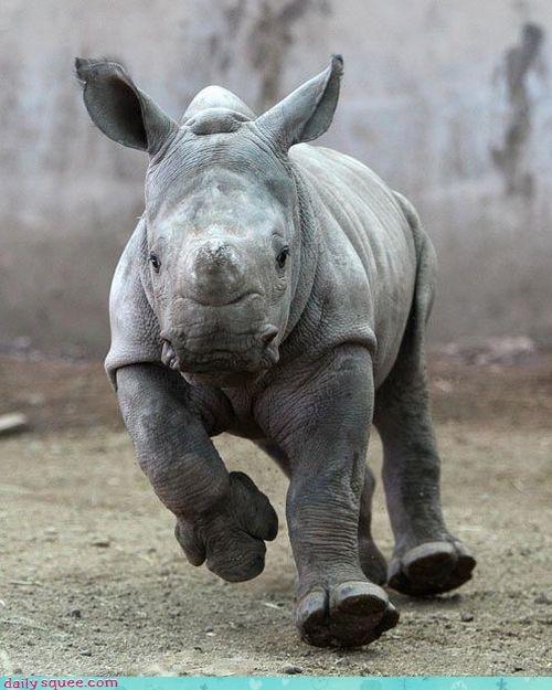 baby,cute,rhino