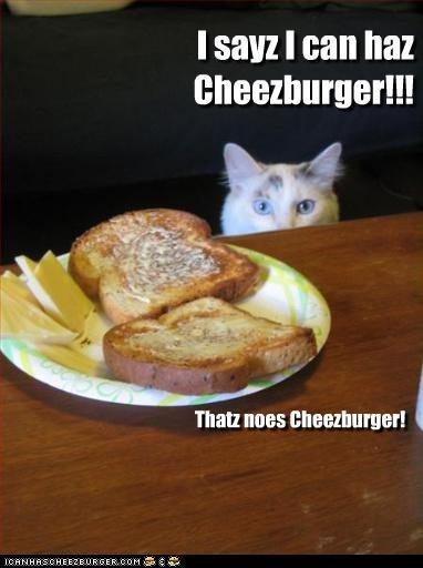 Cheezburger Image 3173234176