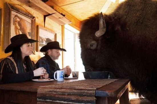 a family picture with a pet bison