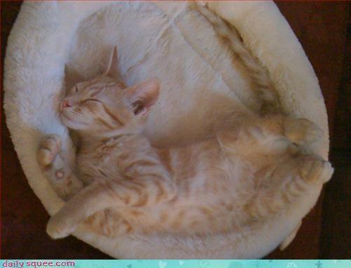 kitten nap sleep - 3173641216
