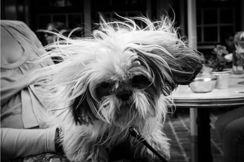 photos of street dogs