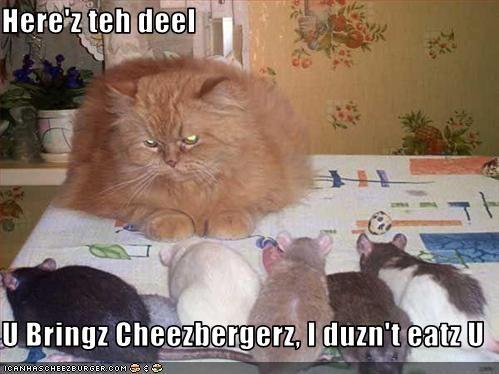 Cheezburger Image 3174093312