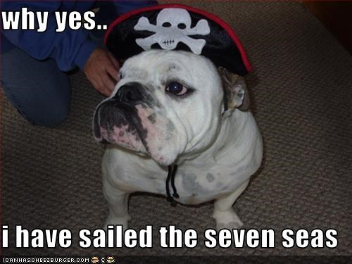 bulldog,costume,Pirate,sailing