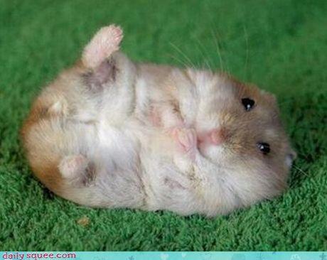 hamster - 3174663168