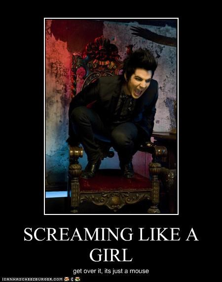adam lambert,gay,girl,scream,sissy
