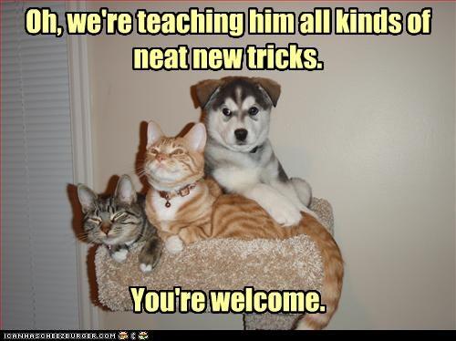 lolcats suspicious teacher trick trouble - 3176510720