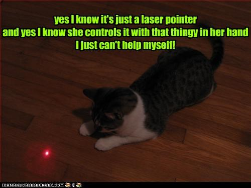 cat,laser pointer,toy